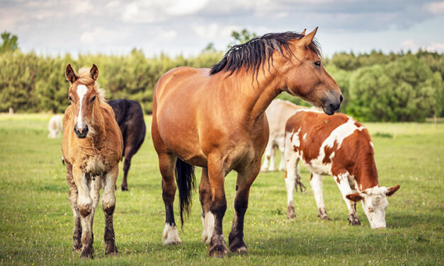 Cows and Horses Might Reduce Each Other's Worm Burdens