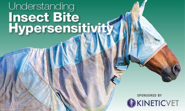 Understanding Insect Bite Hypersensitivity in Horses