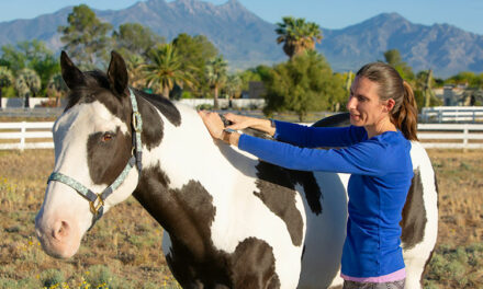 Where's the Line Between Massage Therapy and Veterinary Care?