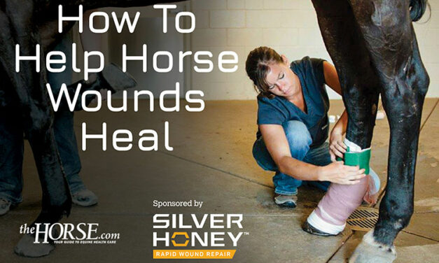 How to Help Horse Wounds Heal