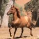 TEEA:  Red Dun Mustang Mare – Ready for Training/Project