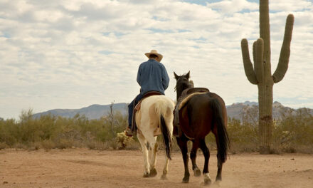 Staving Off Summer Weight Loss in Horses