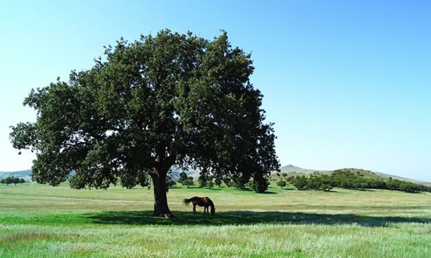 Study: Horses Might Not Use Shade, But They Need the Option