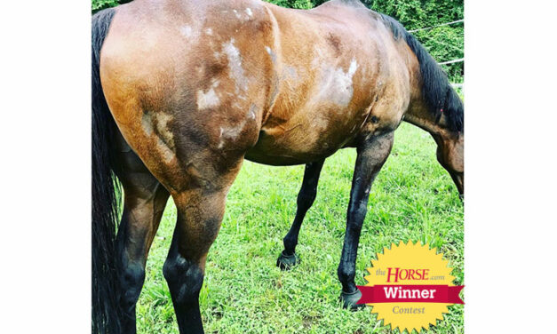 <em>The Horse</em> Announces 'Itchy Horse Challenge' Contest Winner