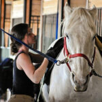 The Top 5 Signs and Factors Flagging an Ulcery Horse
