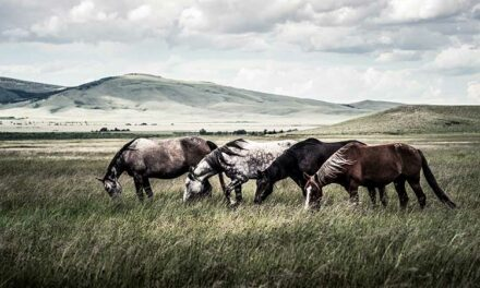 Return to 'The Wild' to Keep Horses' Hindguts Healthy