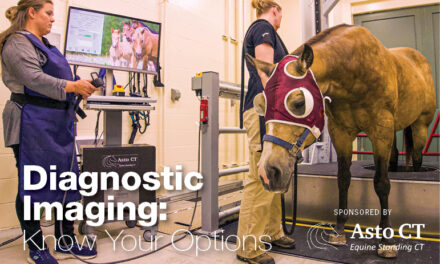 Equine Diagnostic Imaging: Know Your Options