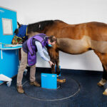 Equine Standing Limb CT: Is This The New Normal?