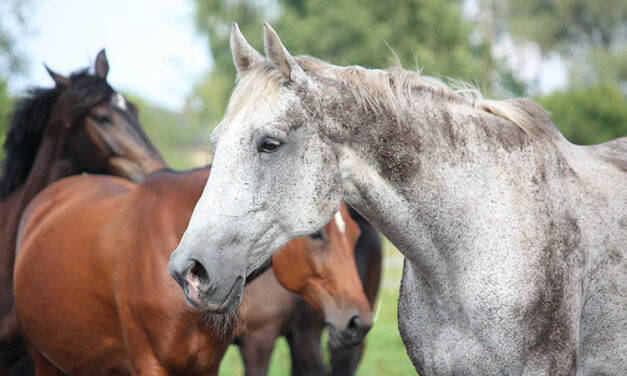 How Do Old Horses Spend Their Days?