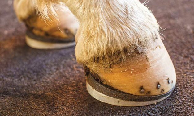 Wedges, Rounded Toes, and Backward Shoes Ease Hoof Breakover