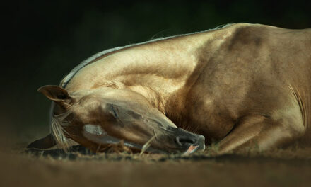 What Happens To Sleep-Deprived Horses? They Collapse