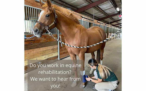Researchers Launch Survey to Assess Equine Rehab Needs