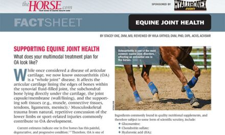 Fact Sheet: Supporting Equine Joint Health