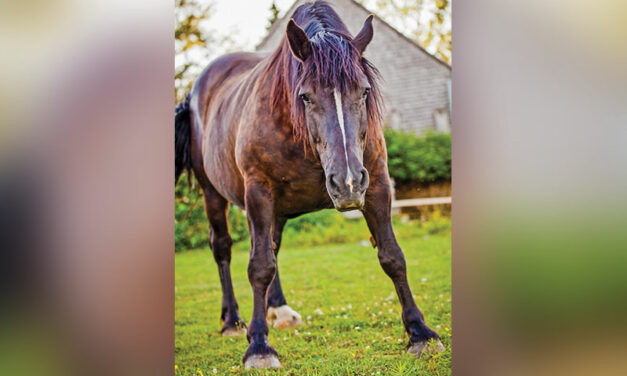 Nutrition Strategies for Horses With Equine Metabolic Syndrome