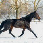 Simple Steps to Help Your Horse Gain Weight