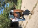Free 10-12 yr old Bay Mare