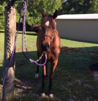 Browse Our Horses-for-Sale and Free-Horse Listings – The Horse